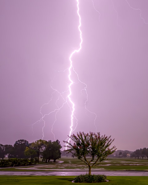 The Tree of Lightning 2