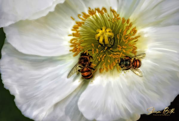 Two Bees In A Flower Art | Sharon Beth