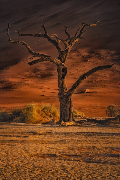 Surreal Landscape Photography Art   nancyney
