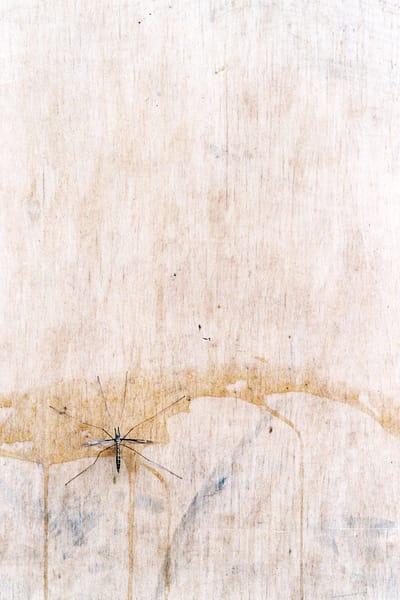 Bug Urban Zen Abstract Nature Fine Art Print – Sherry Mills