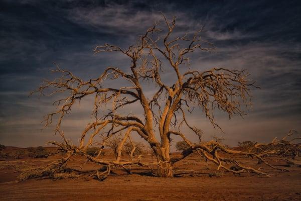 Infinite Branches Photography Art   nancyney