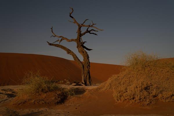 Natural World Photography Art   nancyney