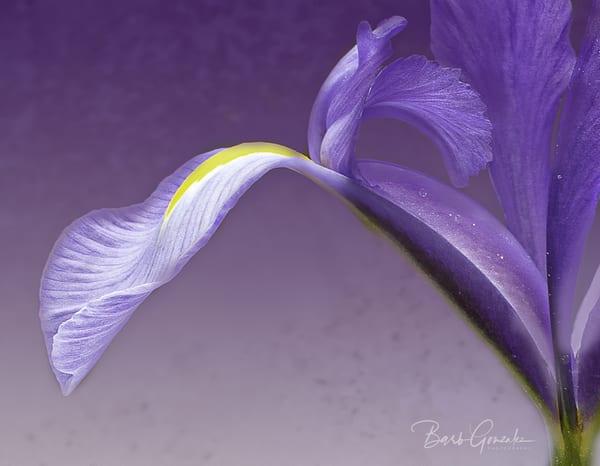 Lightpurpleiris  Photography Art | Barb Gonzalez Photography