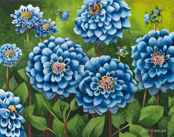 """Blue Dahlia"" fine art print by Jim Dolan."