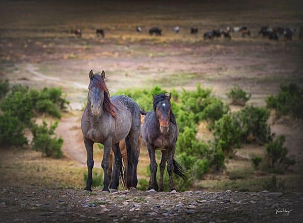 We Are The Wild  Photography Art | Koru Photo Designs