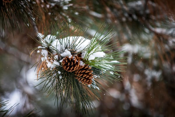 The Painted Pinecone Art | Earth Trotter Photography