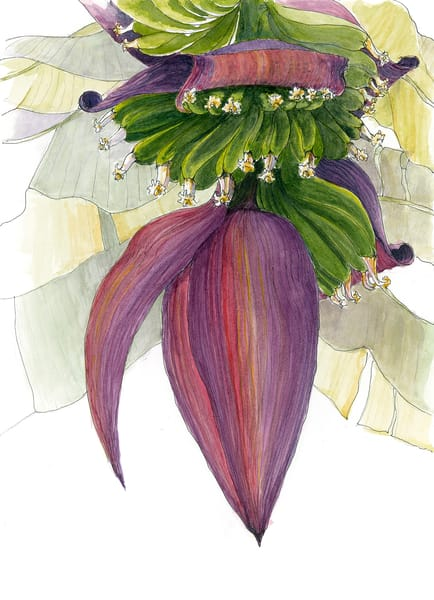 Banana Blossom Art | Digital Arts Studio / Fine Art Marketplace