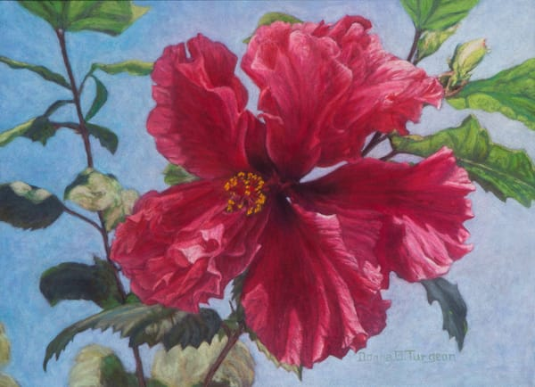 Huge Red Hibiscus Flower, Painting and Prints by Donna Turgeon