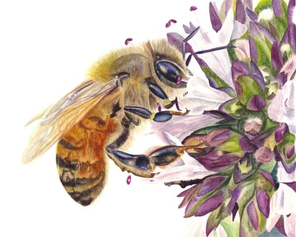 Honey Bee And Oregano Art | Gossamer Lane Fine Art