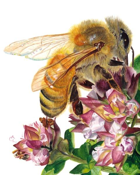 Honey Bee And Golden Marjoram Art | Gossamer Lane Fine Art
