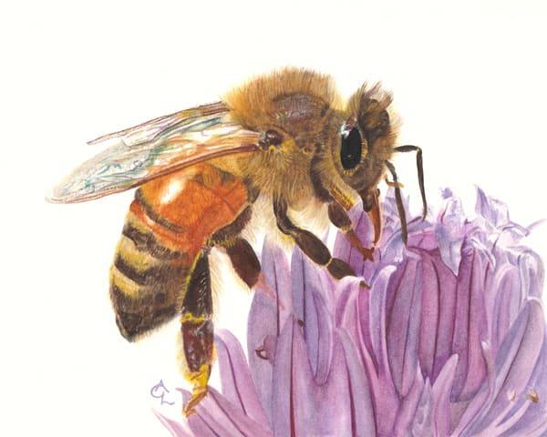 Honey Bee And Chive Blossom  Art | Gossamer Lane Fine Art