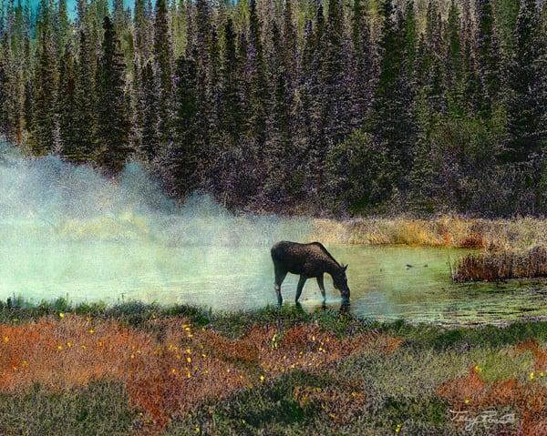 Moose in Mist in Field in Alaska by Terry Rosiak