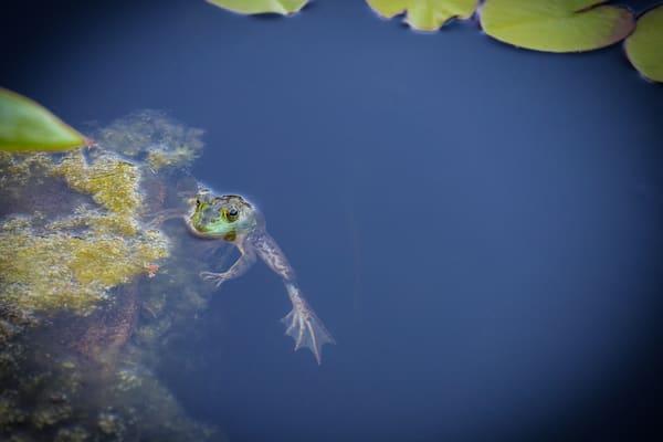 Frog at Atlanta Botanical Garden - Photography Collection   Eugene L Brill