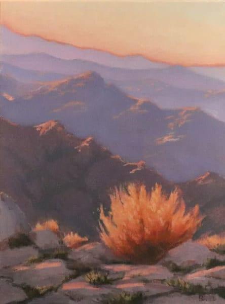 Desert Flora Aglow Art | Terry Sauve Fine Art