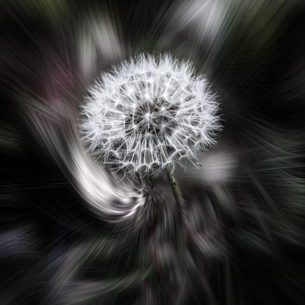 Dscf2234 Aflatsquare Art | Roy Fraser Photographer