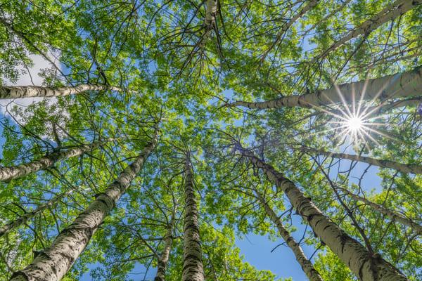 Aspen Sun Star Photography Art | Alex Nueschaefer Photography