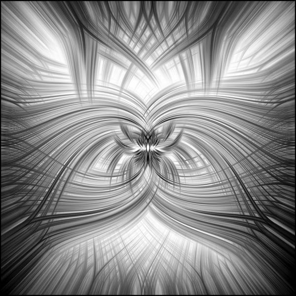 Cacti Abw Art | Roy Fraser Photographer