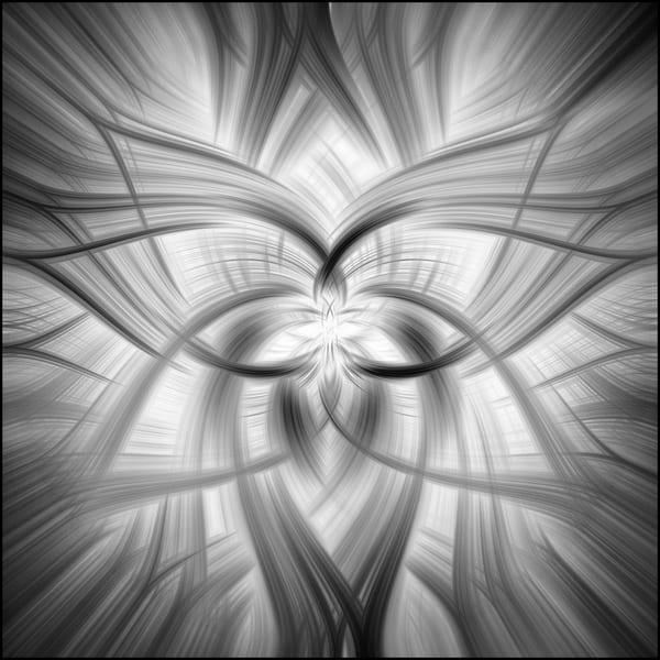 380flower Hsquare1 L Art | Roy Fraser Photographer