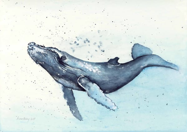 Dance of the Humpback