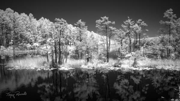 Reflections on Oswego Lake