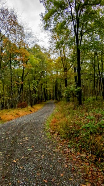 My Walking Path in Pennsylvania by Terry Rosiak