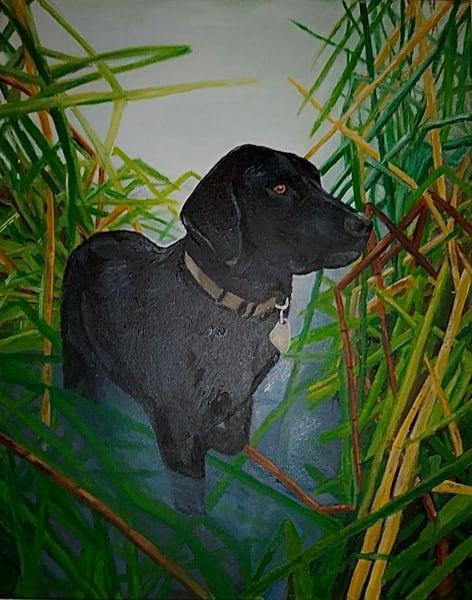 Custom Pet Painting Art | Coat Of Many Colors