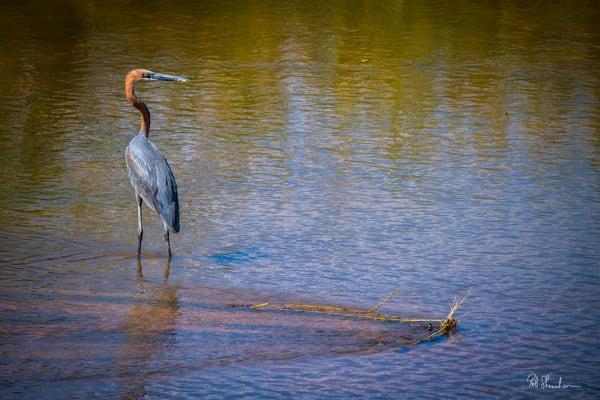 Goliath crane art gallery photo prints by Rob Shanahan