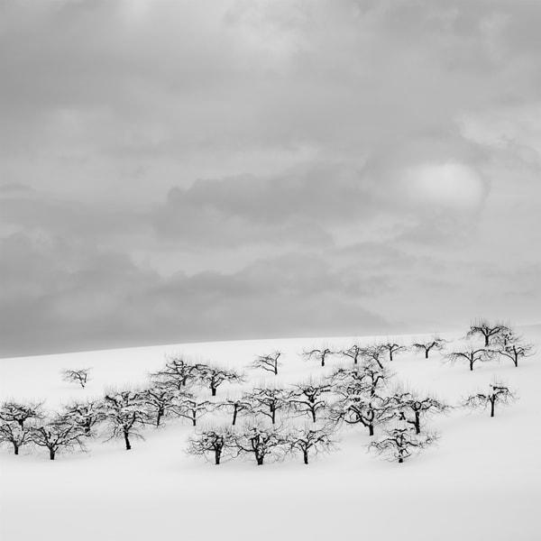 Hokkaido Study05 Art   Roy Fraser Photographer
