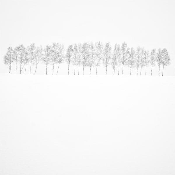 Hokkaido Study11 Art | Roy Fraser Photographer