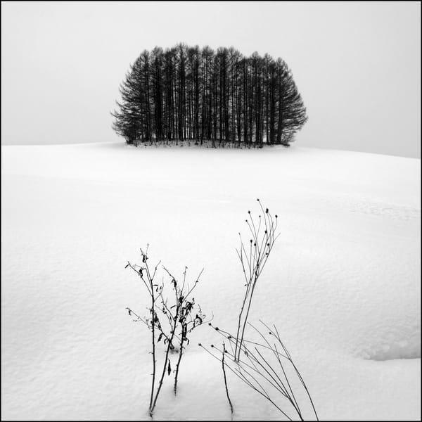 Hokkaido Study10 Art | Roy Fraser Photographer