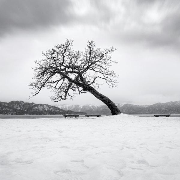 Hokkaido Study19 Art   Roy Fraser Photographer