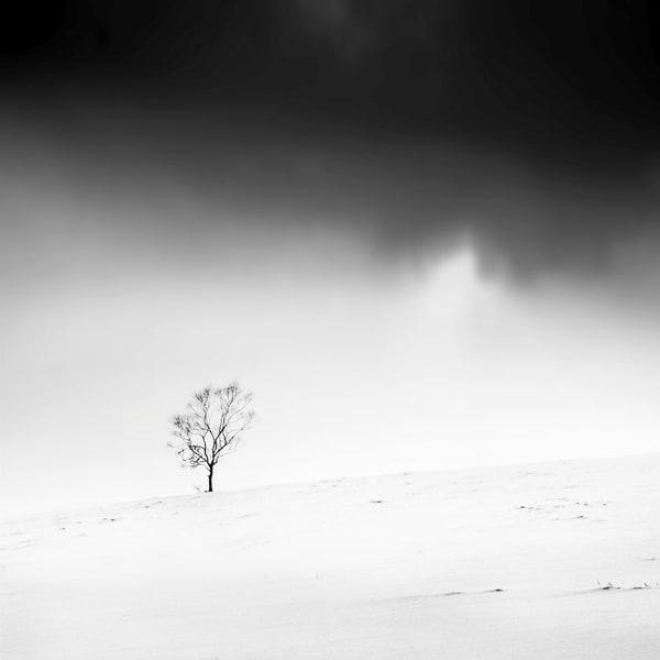 Hokkaido Study25 Art   Roy Fraser Photographer