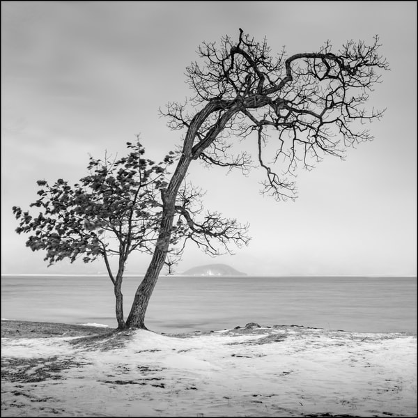 Hokkaido Study23 Art   Roy Fraser Photographer
