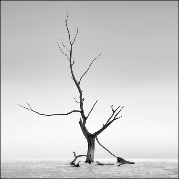 Hokkaido Study26 Art   Roy Fraser Photographer