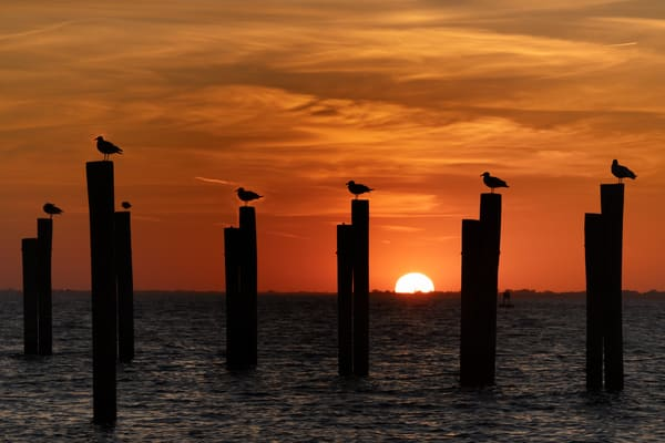 Seagulls At Attention Photography Art   nancyney