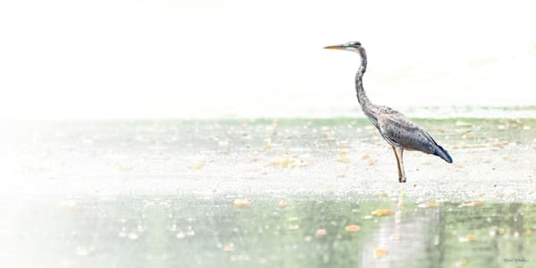 Heron Wading And Fishing High Key 9731 Art | Koral Martin Fine Art Photography