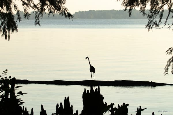 Heron Silhouettes Mg 7509 Srm20 Photography Art | Koral Martin Fine Art Photography