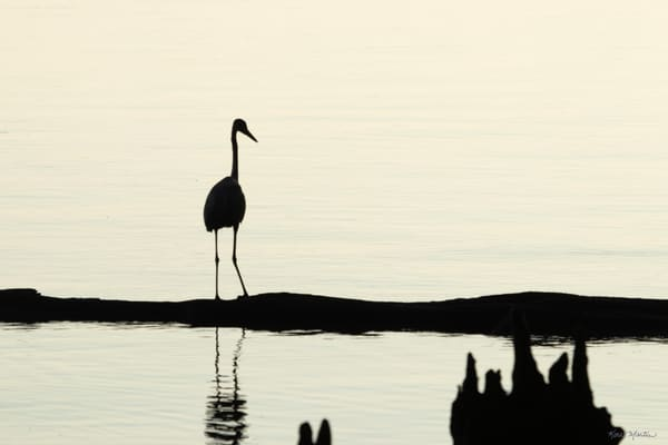 Early Morning Fishing     Blue Heron Silhouette 7521 Art | Koral Martin Fine Art Photography