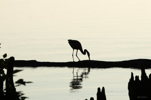 Early Morning Fishing     Blue Heron Silhouette 7522 Art | Koral Martin Fine Art Photography