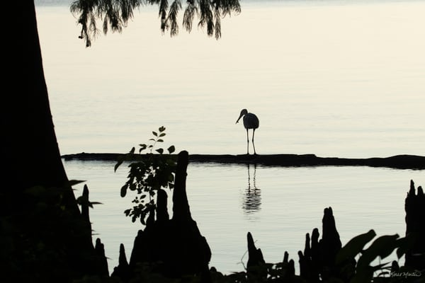 Early Morning Fishing     Heron Silhouette 7526 Art | Koral Martin Fine Art Photography