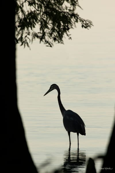 Early Morning Fishing     Heron Silhouettes 7532 Art | Koral Martin Fine Art Photography