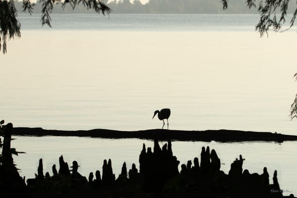 Heron Silhouettes  7511  Photography Art | Koral Martin Healthcare Art