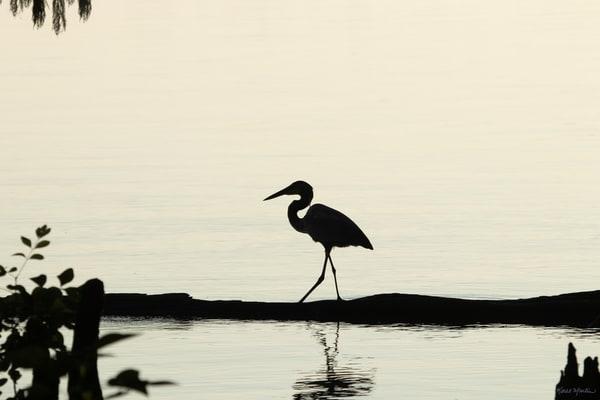 Heron Silhouettes  7524  Photography Art | Koral Martin Healthcare Art