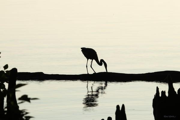 Heron Silhouettes  7522  Photography Art | Koral Martin Healthcare Art