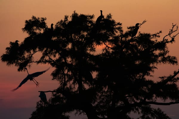 Egret Tree Sunrise  8417  Photography Art | Koral Martin Healthcare Art