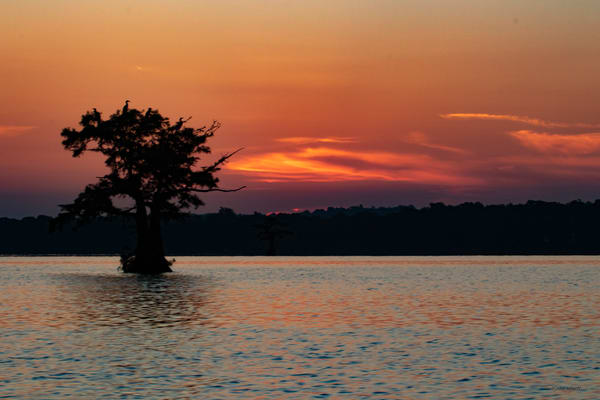 Egret Tree Sunrise  8459  Photography Art | Koral Martin Healthcare Art