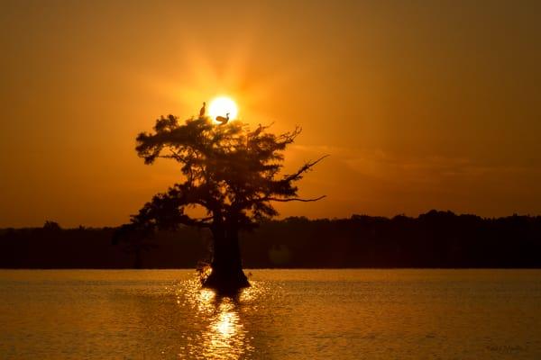 Sunsize Cormorant Tree Tm  8534  Photography Art | Koral Martin Healthcare Art