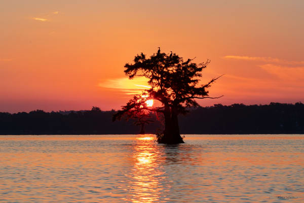 Sunsize Cormorant Tree Sun Lower G  8482  Photography Art | Koral Martin Healthcare Art