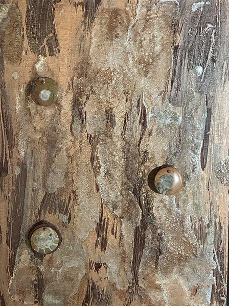 Ammonite Arsenal Art | Martsolf Lively Contemporary