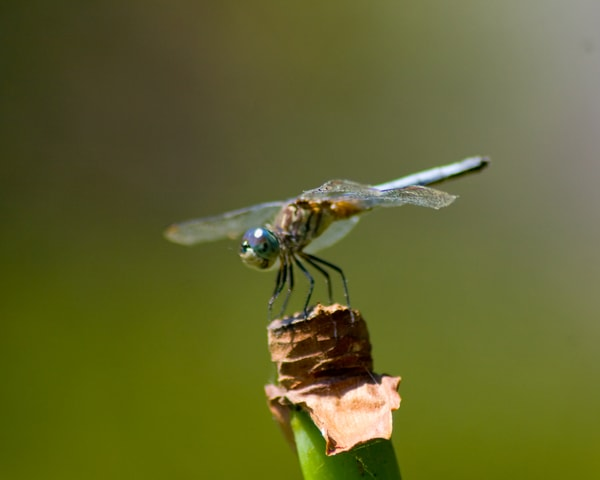 Blue Dragonfly Photography Art   It's Your World - Enjoy!